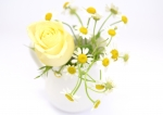 のコルギサロン_黄色バラ