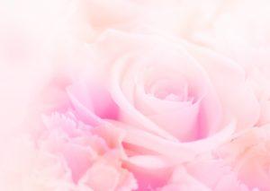 癒しのコルギサロン_エステイメージ花
